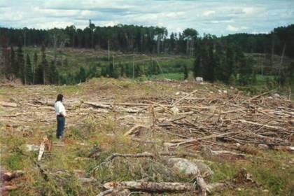 Informe sobre la tala indiscriminada de árboles en Tucumán y Santiago del Estero.
