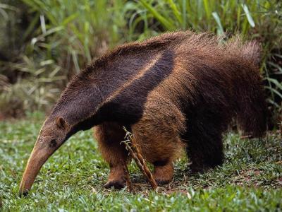 La tragedia en el zoologico de Florencio Varela